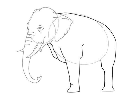 ваш рисунки животных без хвоста для конкурса сумке