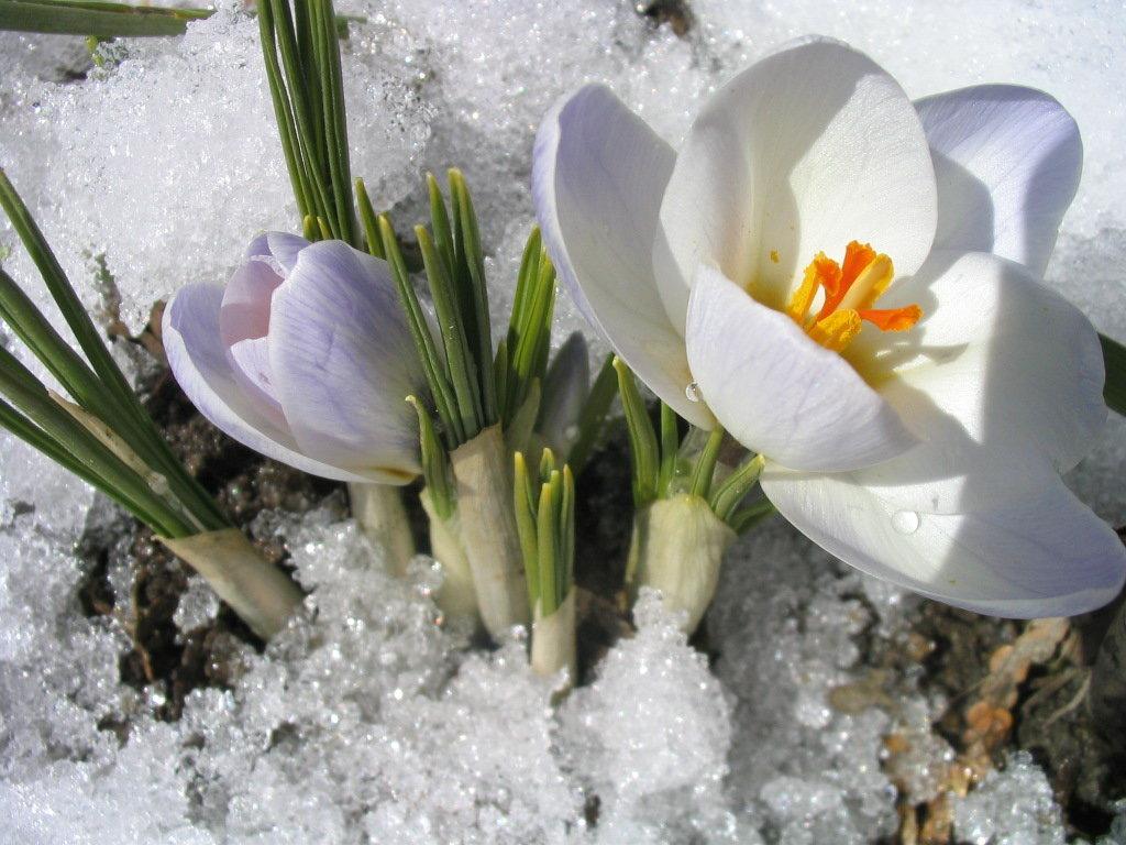 Открытки снег весной