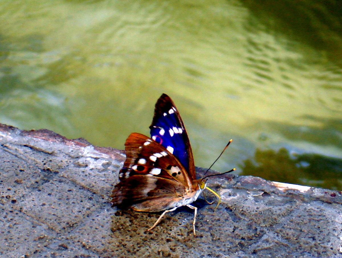 Бабочки на воде картинки