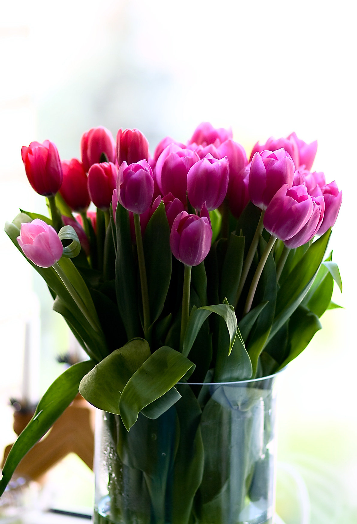 время фото доброе утро с тюльпанами многих грибников