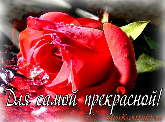 Картинки цветы для девушки с надписями, фредди картинки
