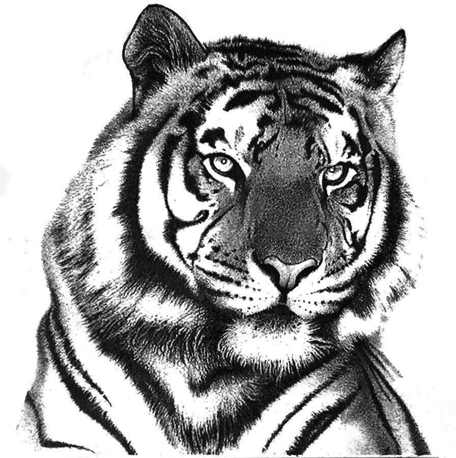 графика картинки черно белые животные река ориноко