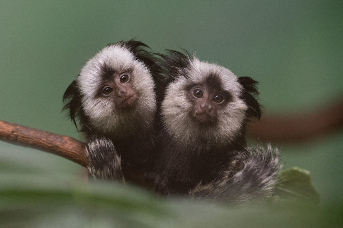 Редиска, картинки прикольные с фото животных смотреть