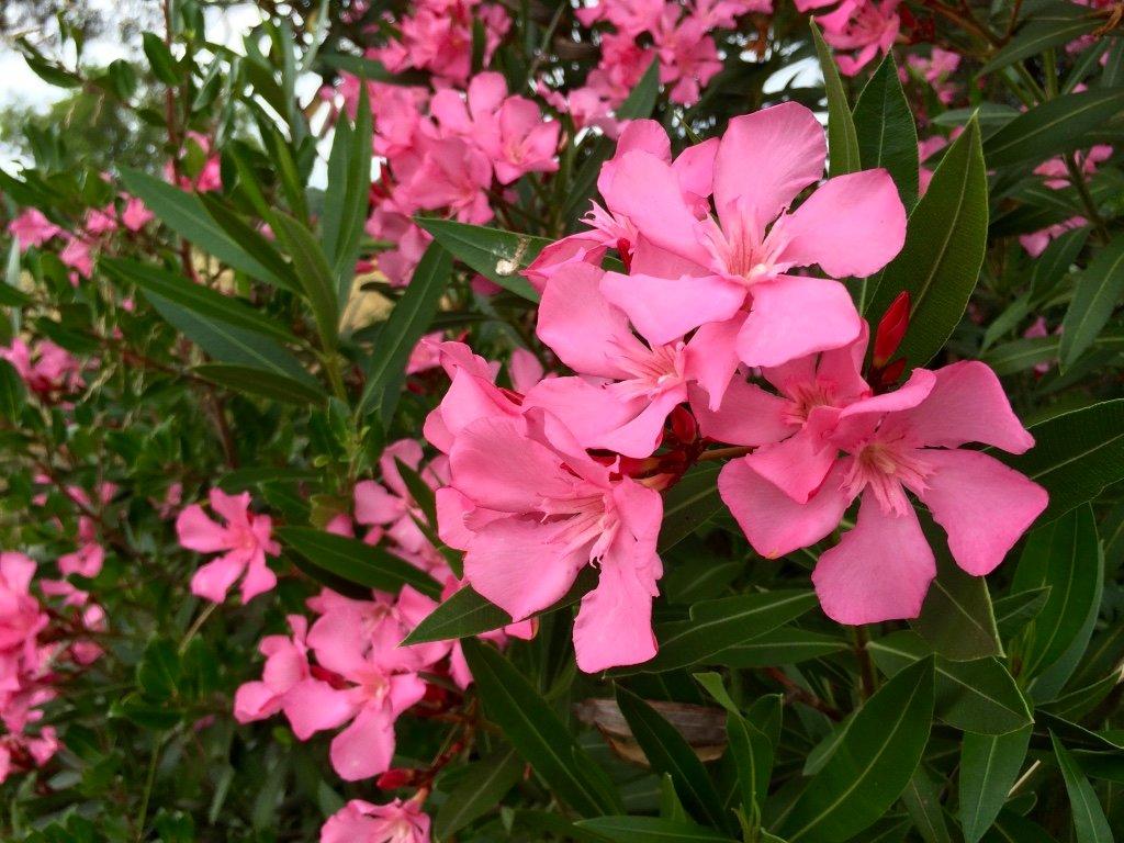 сложно цветы греции фото и названия твой день