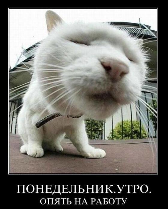 Смешные, фото с кошкой и надписью понедельник день тяжелый