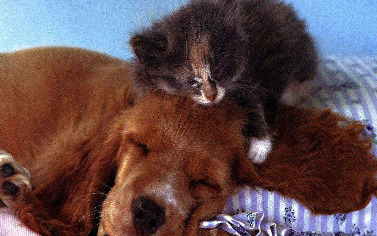 Смешной, смешные картинки щенков и котят