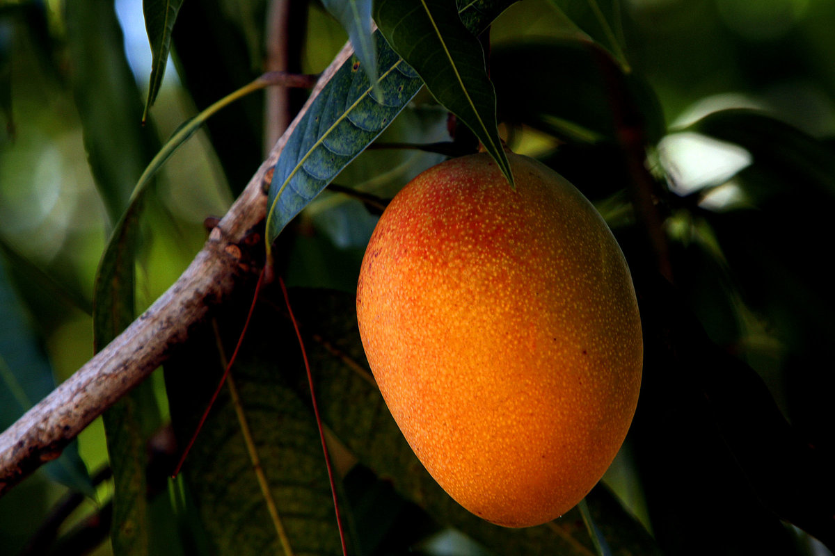 планировать фрукты растут на деревьях картинки длинной шерсти плюшевые