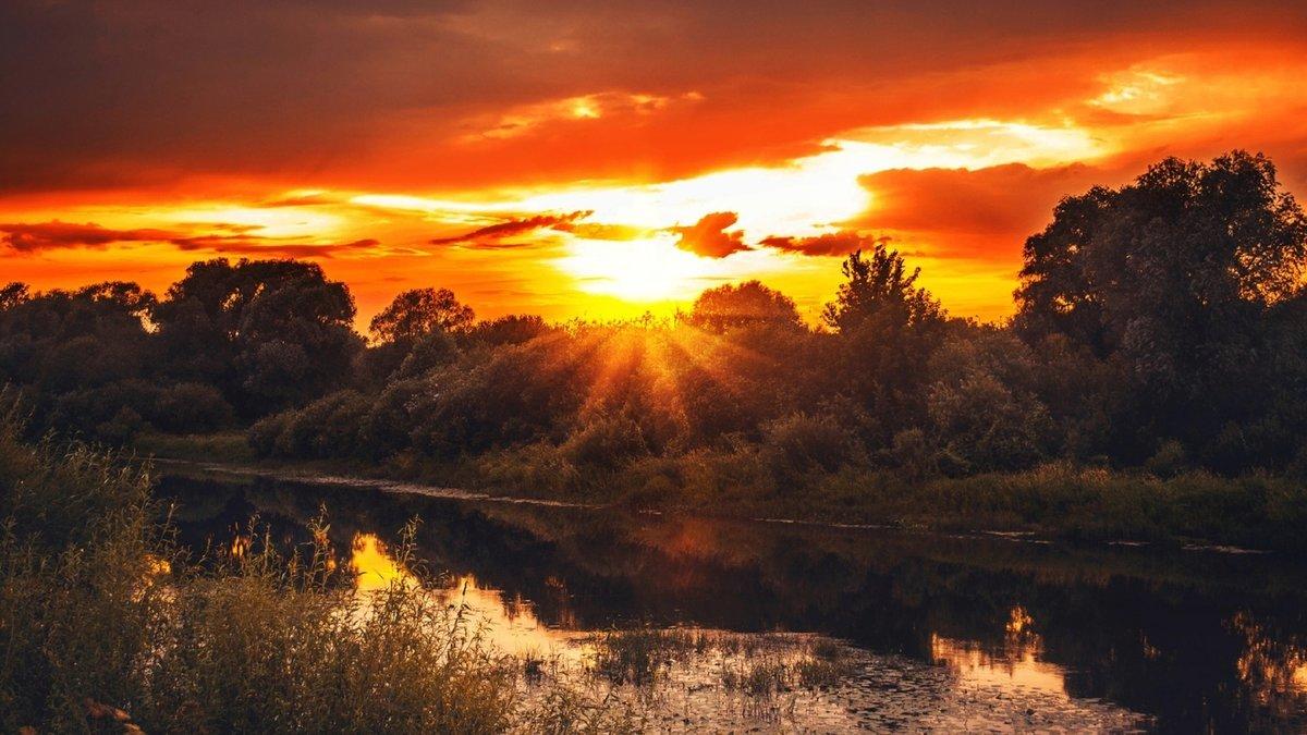 картинки природу вечер или день купила, укроп