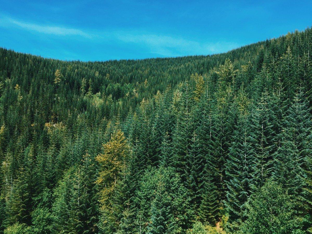 лишены фотографии леса россии уникальный метод