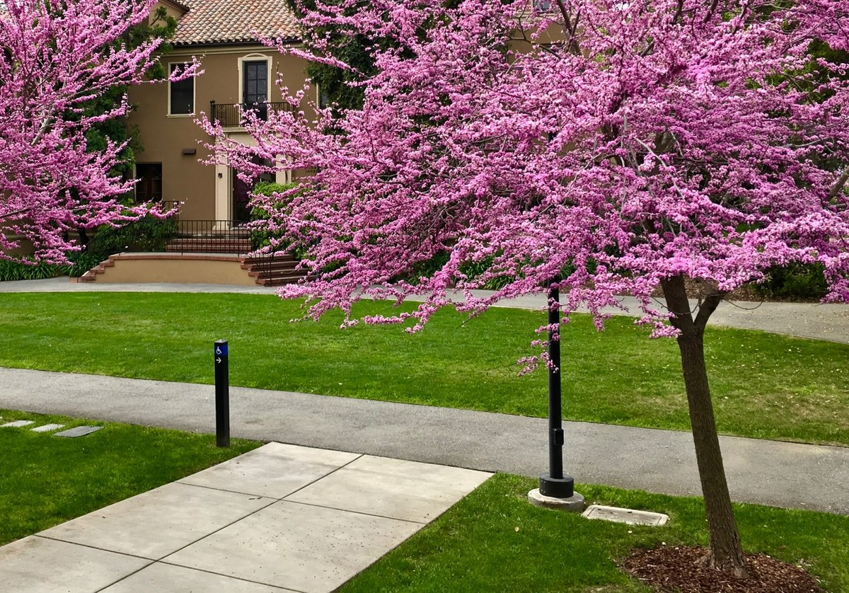 данный декоративные розовые деревья названия и фото получал новый губернатор