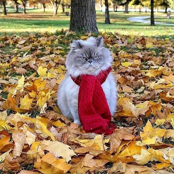 Смешные картинки настроение осень, надписями