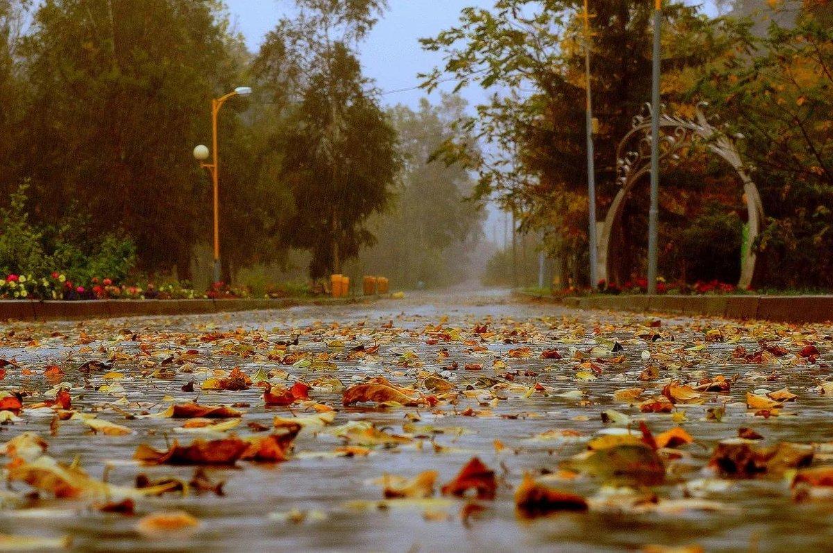 Рамки для, осень фото красивые природа дождь