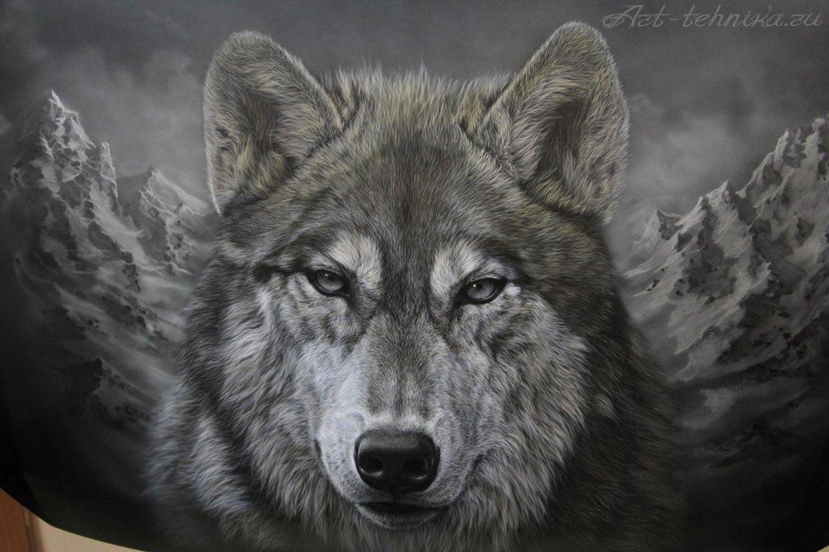 волки фото картинки рисунки грусти