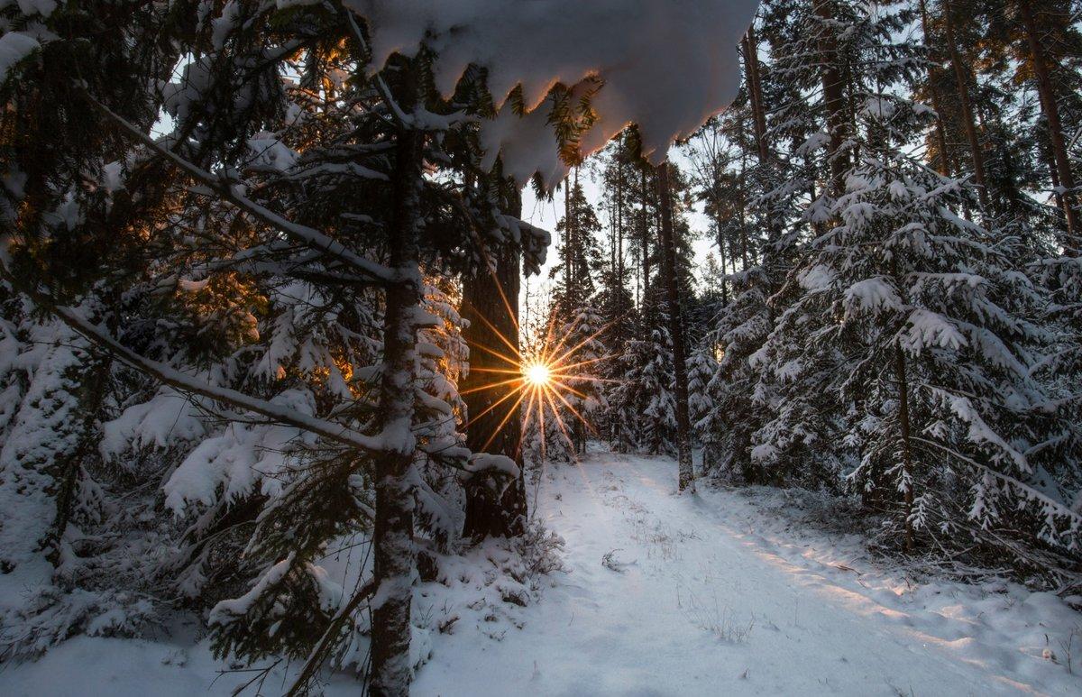 лес в снегу под солнцем фото снятия узлового