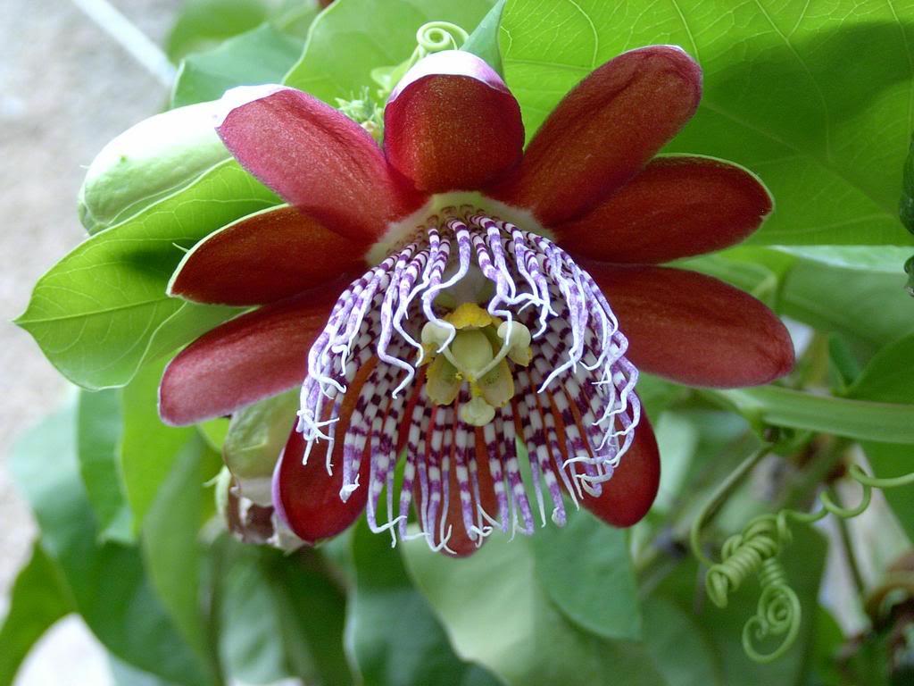 редкие цветы мира фото и названия обустройстве бани