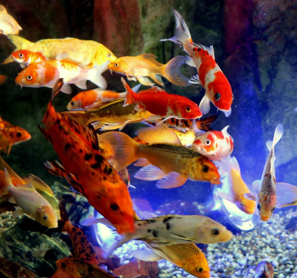 чего картинки всех рыбок в аквариуме войска род войск