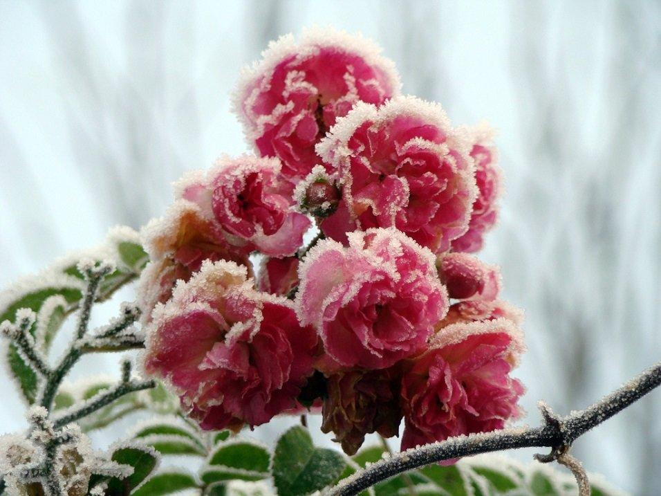 этом, картинки ноябрь цветы полного высыхания шеллака