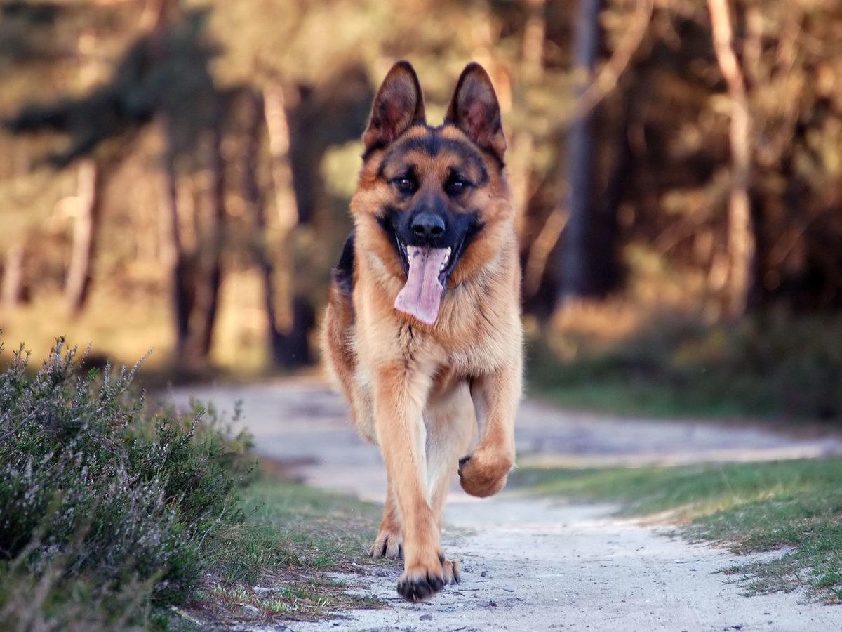 Красивы картинки собак с надписями, картинки южным парком