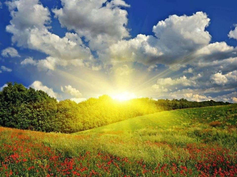 Конек-горбунок, фото день солнца