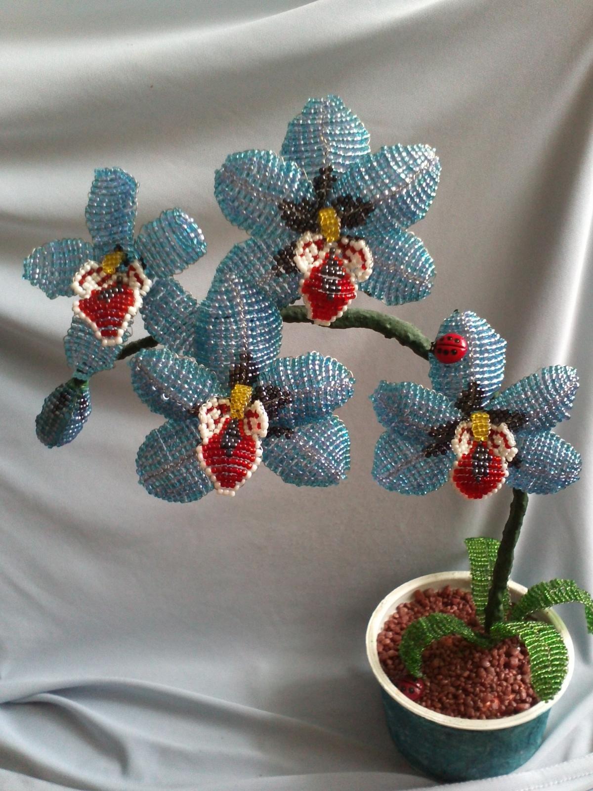 девушка обязательно плетение орхидеи синей из бисера пошаговые фото фото салона хорошо