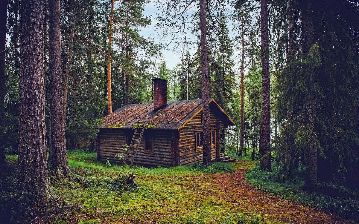 Картинка с избушкой и лесом