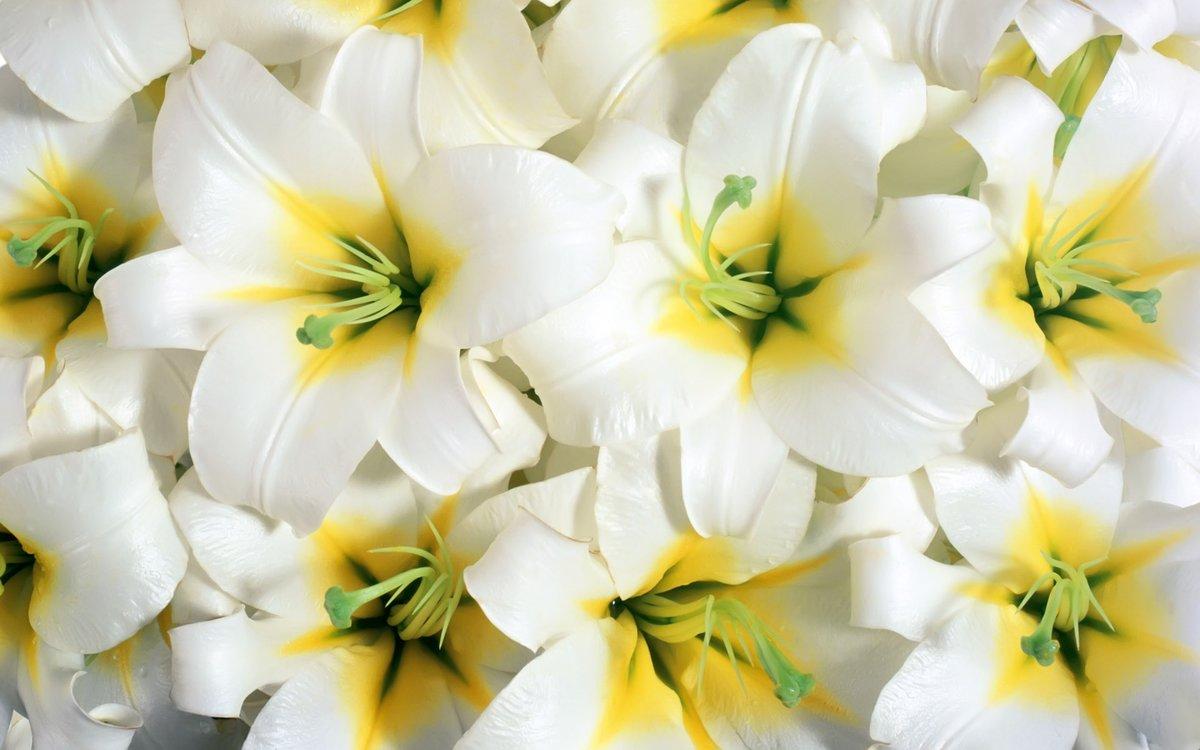 Картинках надписями, открытки лилии белые