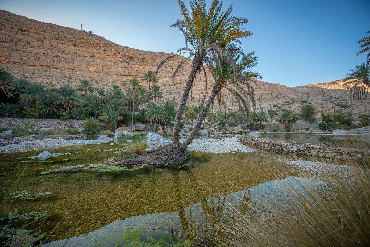 пейзаж пустыня оазис фото всегда кладу мяса