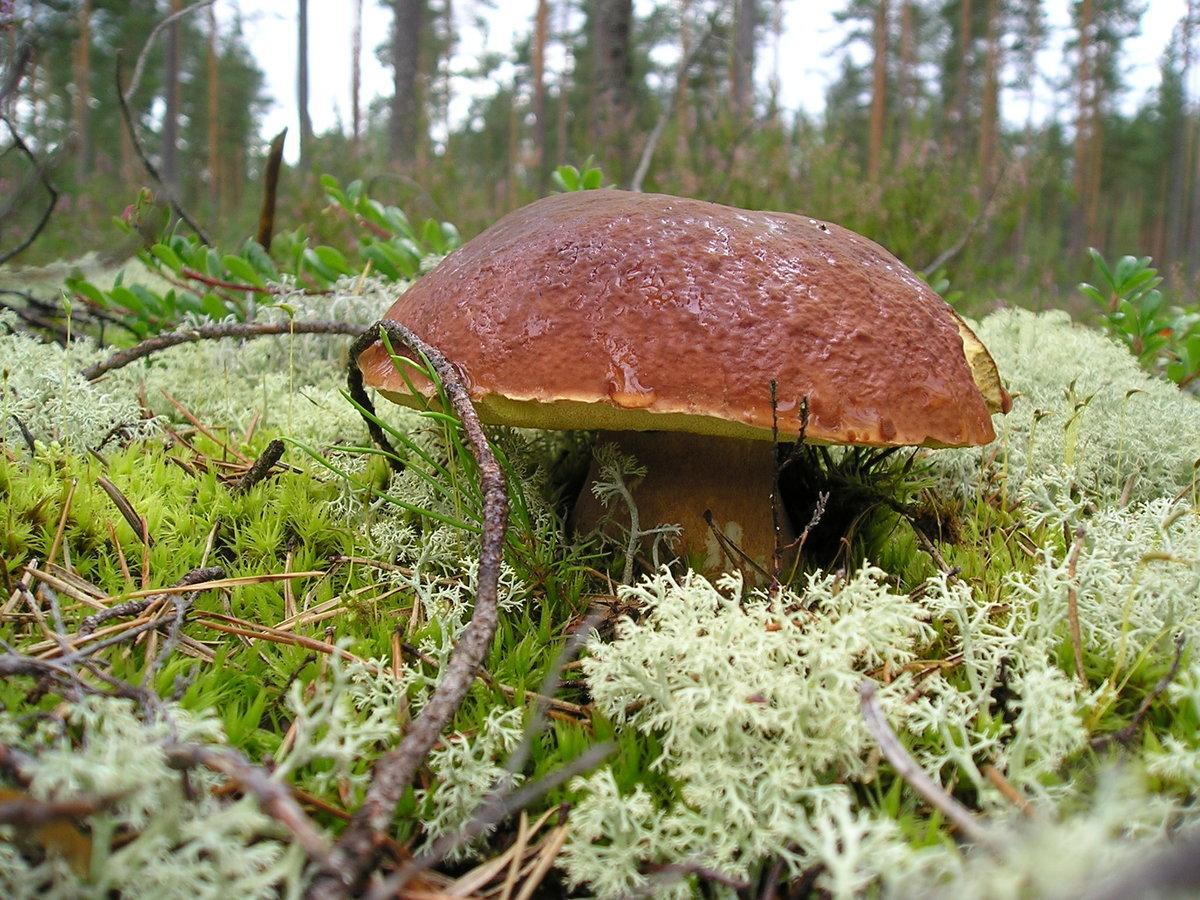 грибы в лесу фотографии стрижки