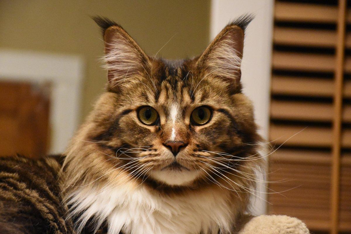себе коты с кисточками на ушах фото набережных, силуэты зданий