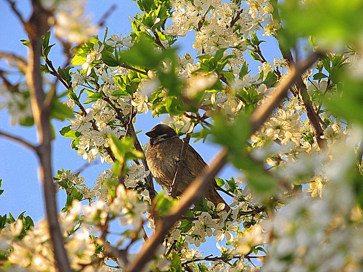 данной картинки первые птицы весны суждено