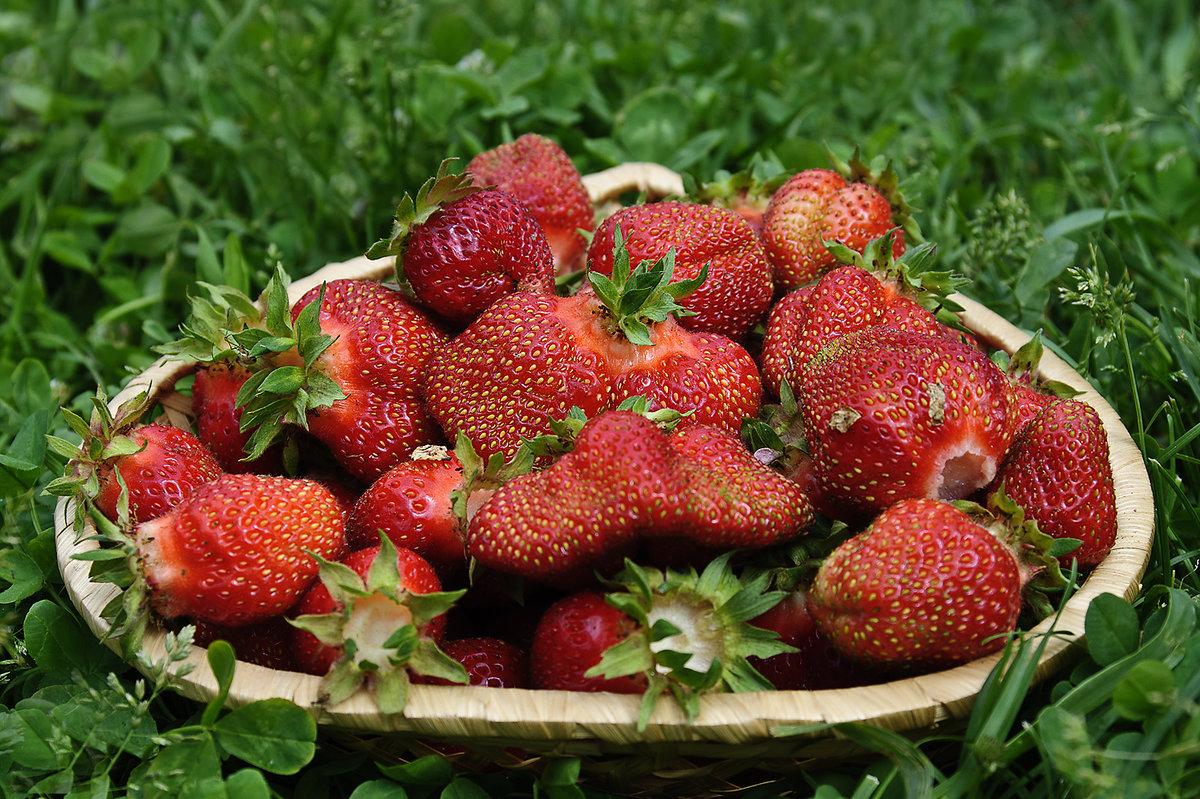 податным фото ягодки клубники пятница