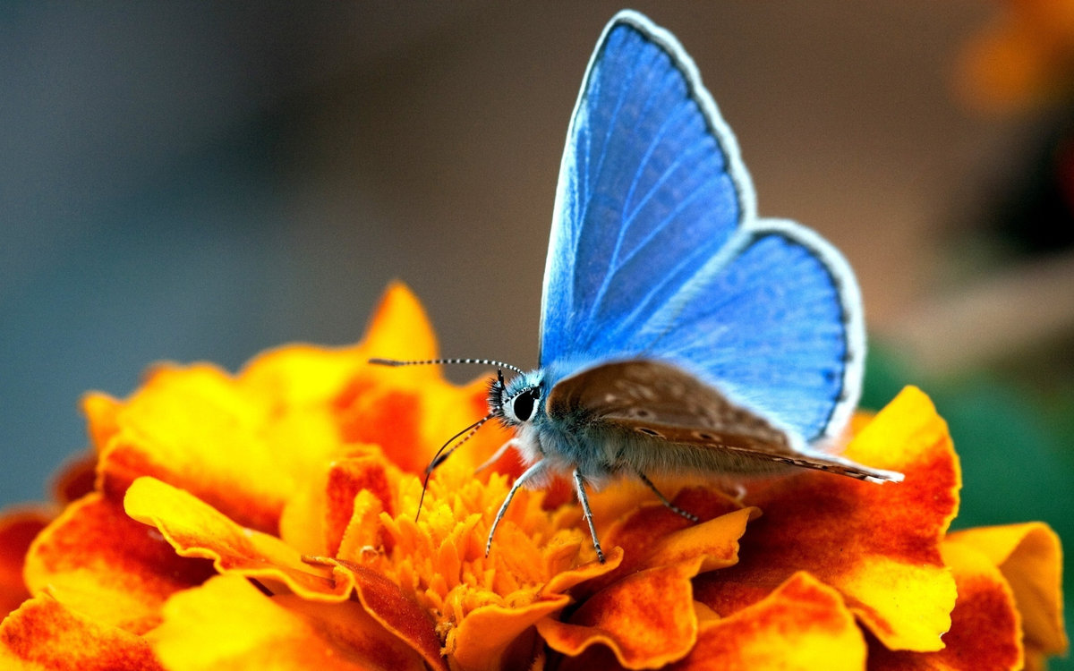 Картинка с бабочкой на цветке, картинки