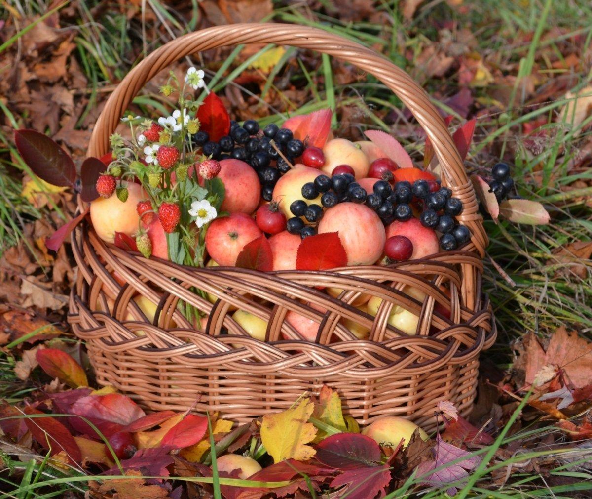 преобразить яблоки в корзине осень фото видео