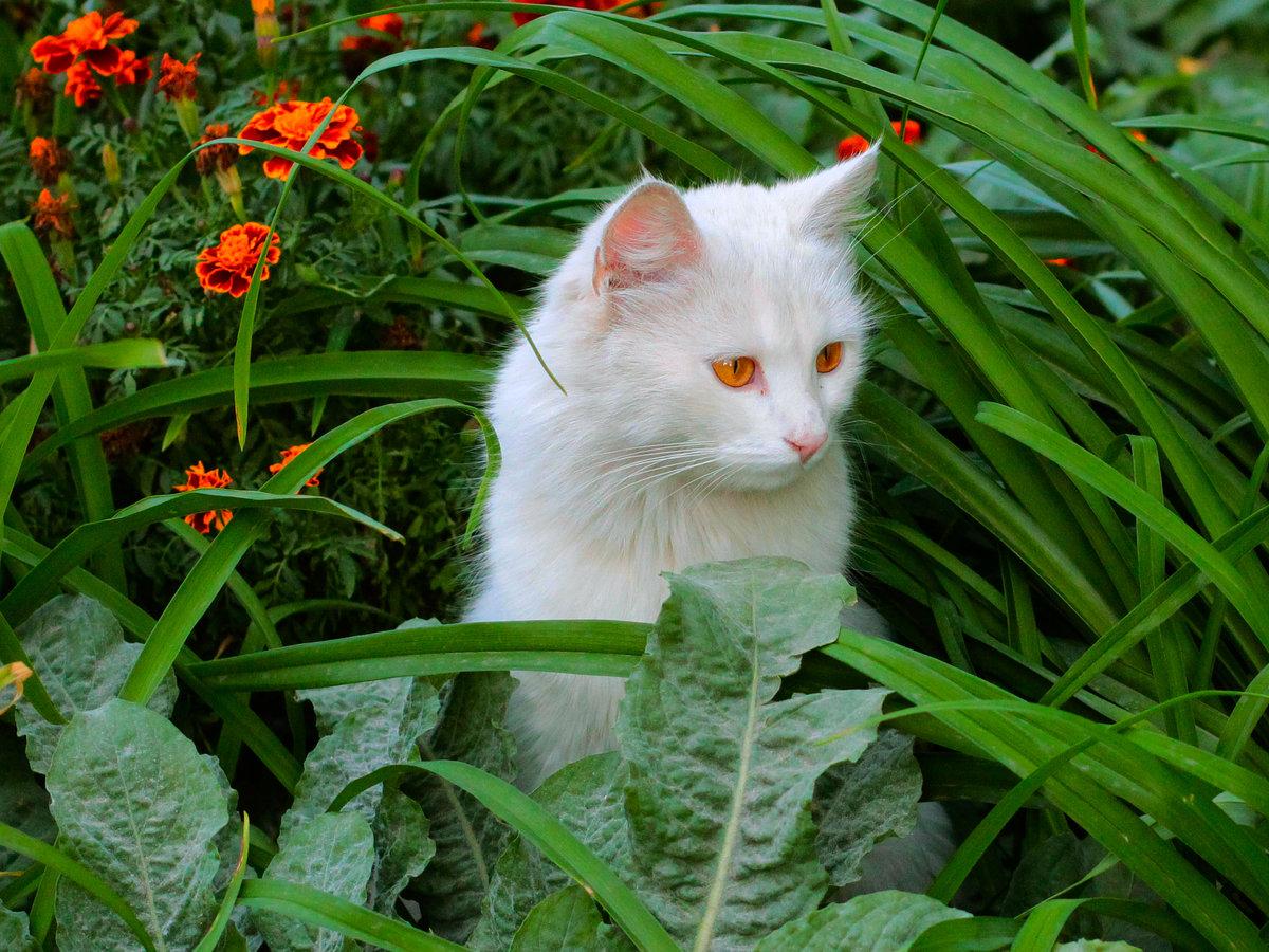 респектабельные картинка красивой белой кошки в цветах редко дает