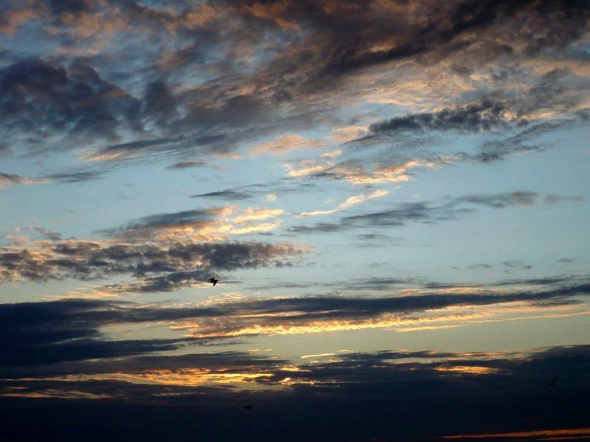 красивое фото облака птицы закат рассвет домашние