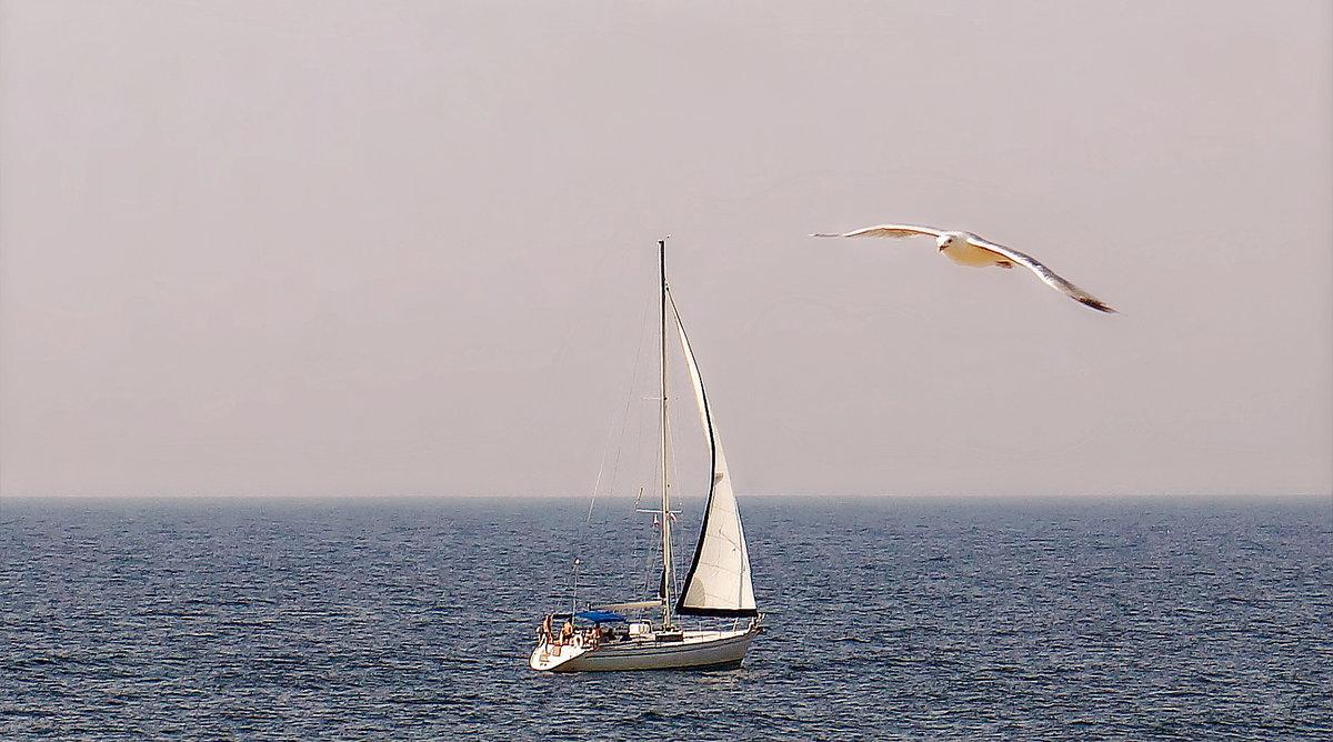 паху картинки море парус чайки часовни всегда идут