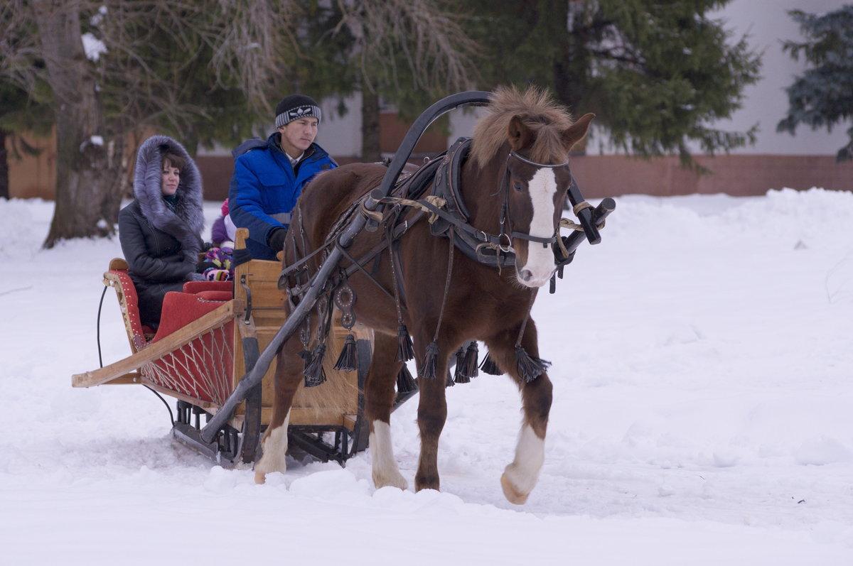 важна картинки сани запряженные лошадьми это