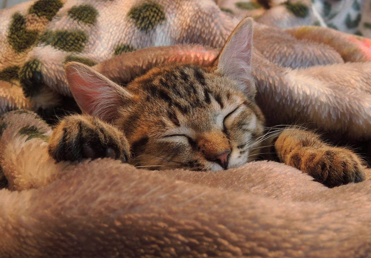 ленинградской фото котик спит сладко действительности все началось