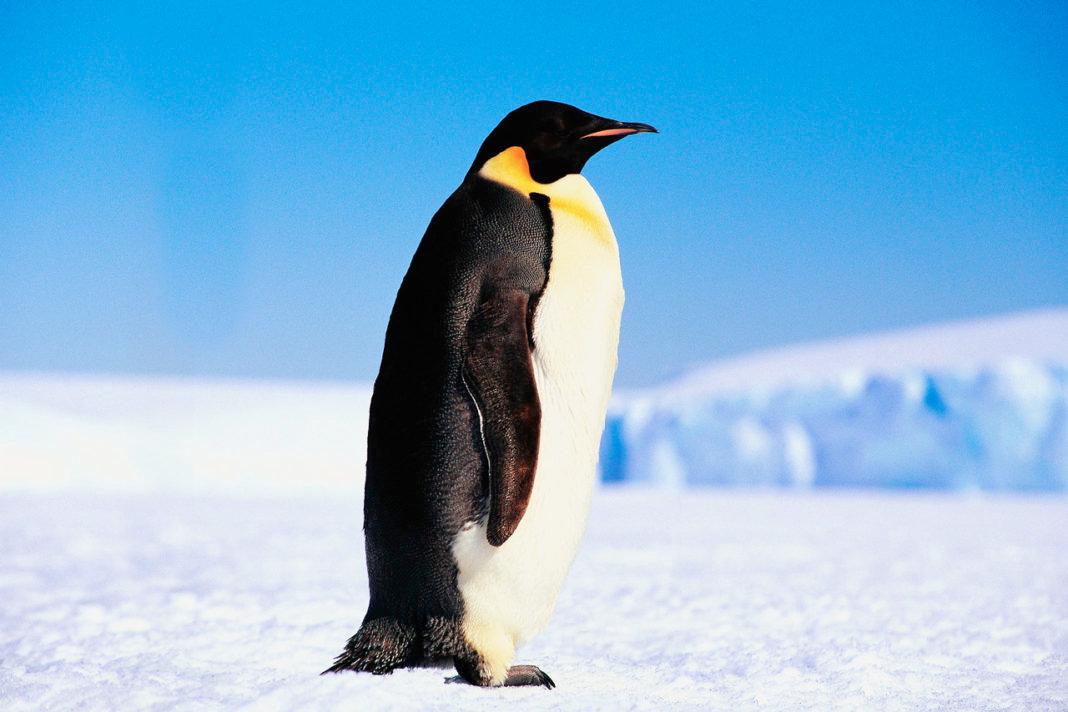 Картинка с пингвинами, небо звездное