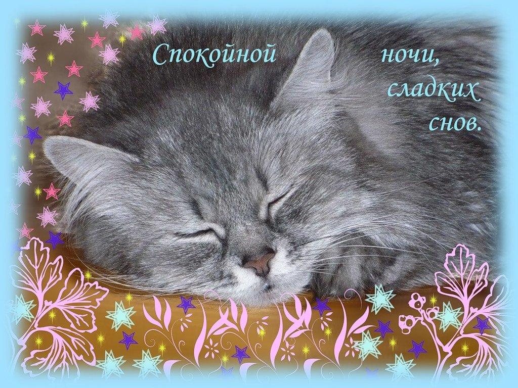 Открытка кошки спокойной ночи