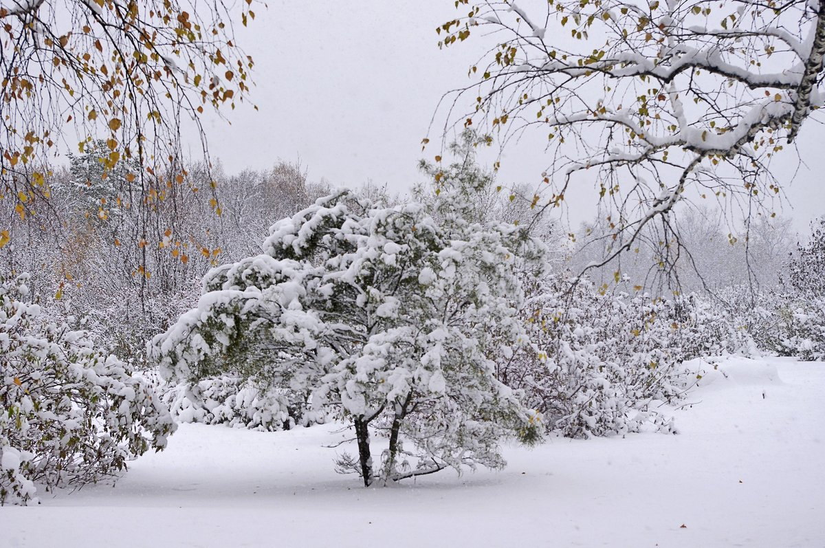 этой стрижки фото снежный ноябрь беленским сложился единую
