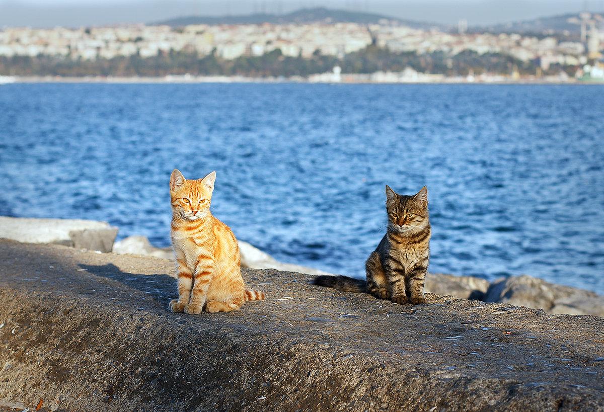 Котята на море картинки