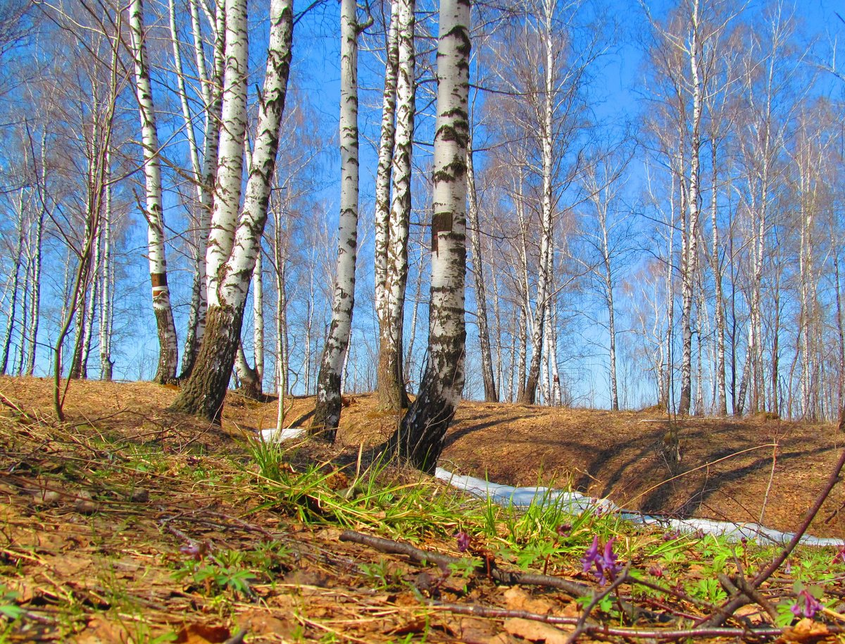 Картинки про весну в лесу