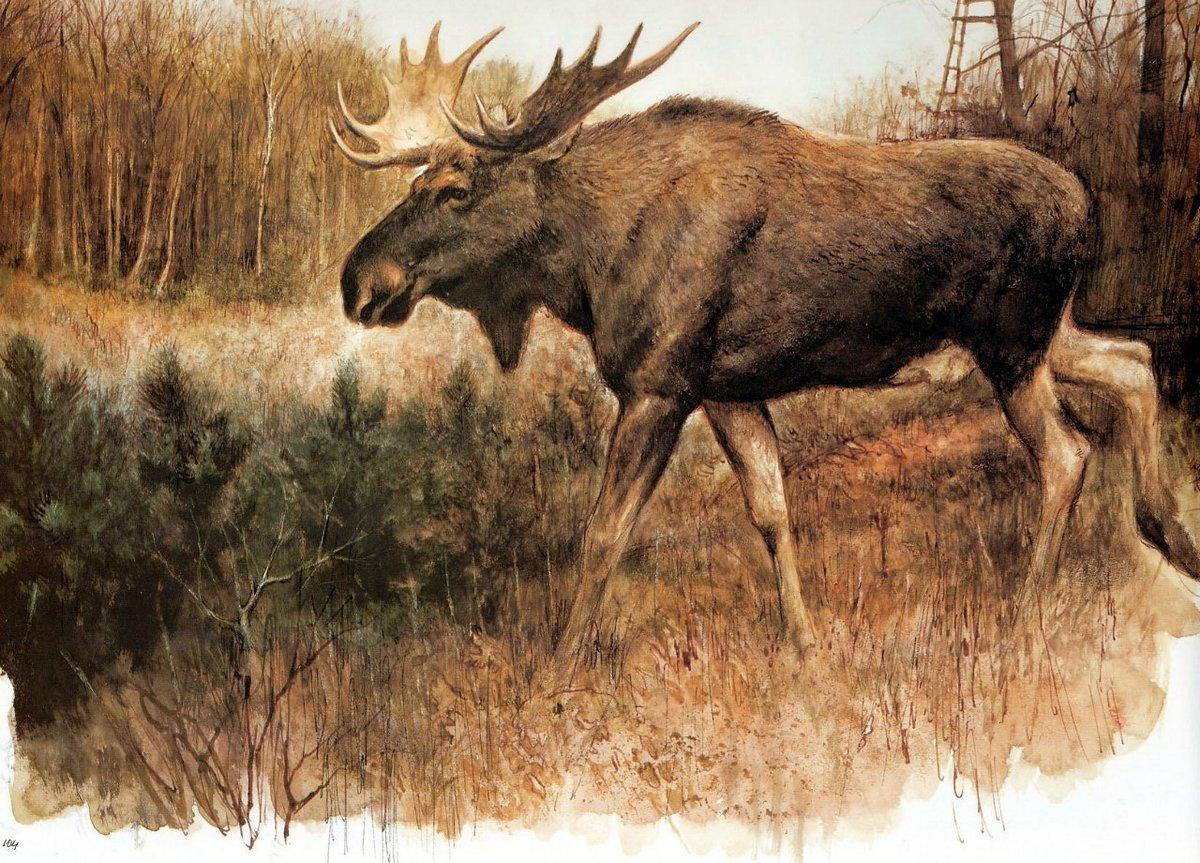 Картинка охотника с лосем
