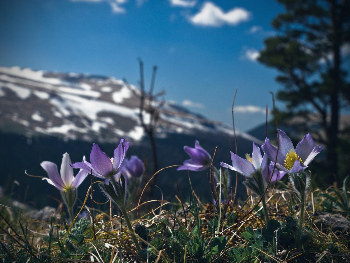Горные цветы краснодарского края фото названия