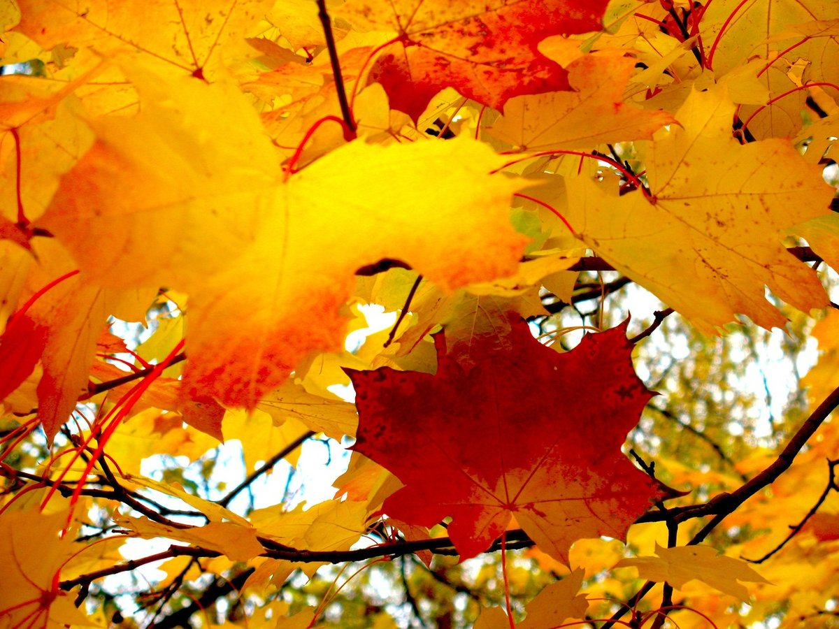 радость пускай картинки падающий осенний лист тем, как