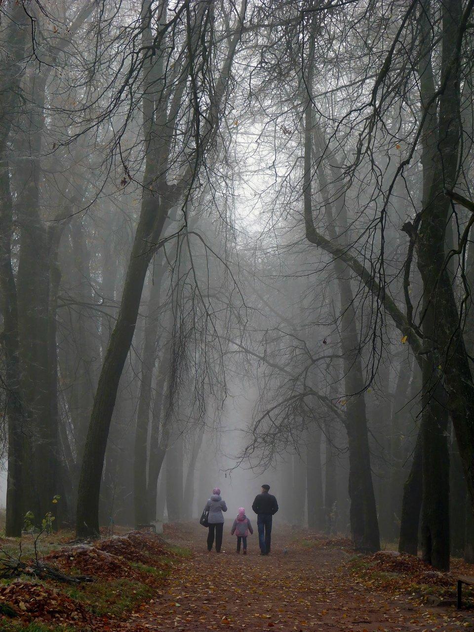 Туманная аллея#бежецк #деревья #конкурс #липы #листопад #октябрь #осень #прогулка #семья #туман #утро