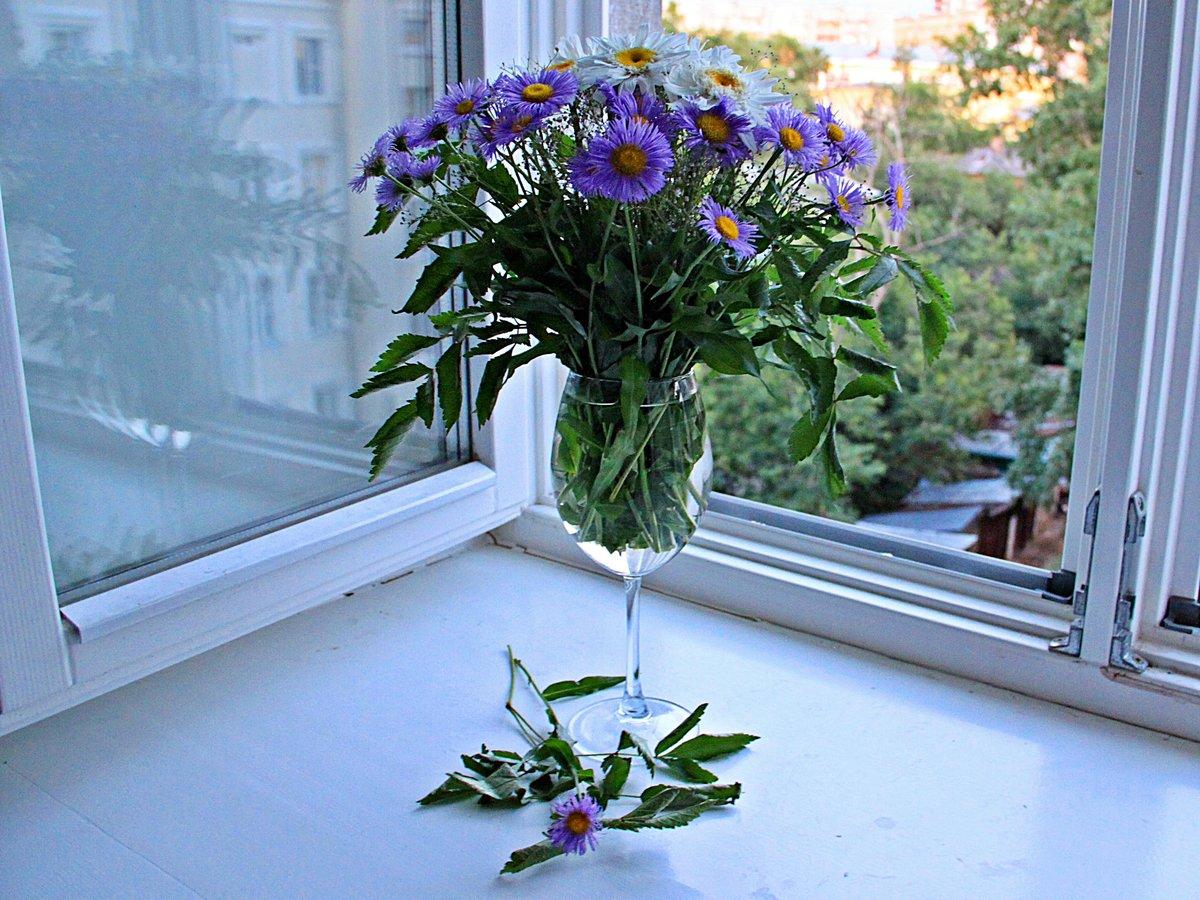 древесины картинки окна с растениями применение препарата при