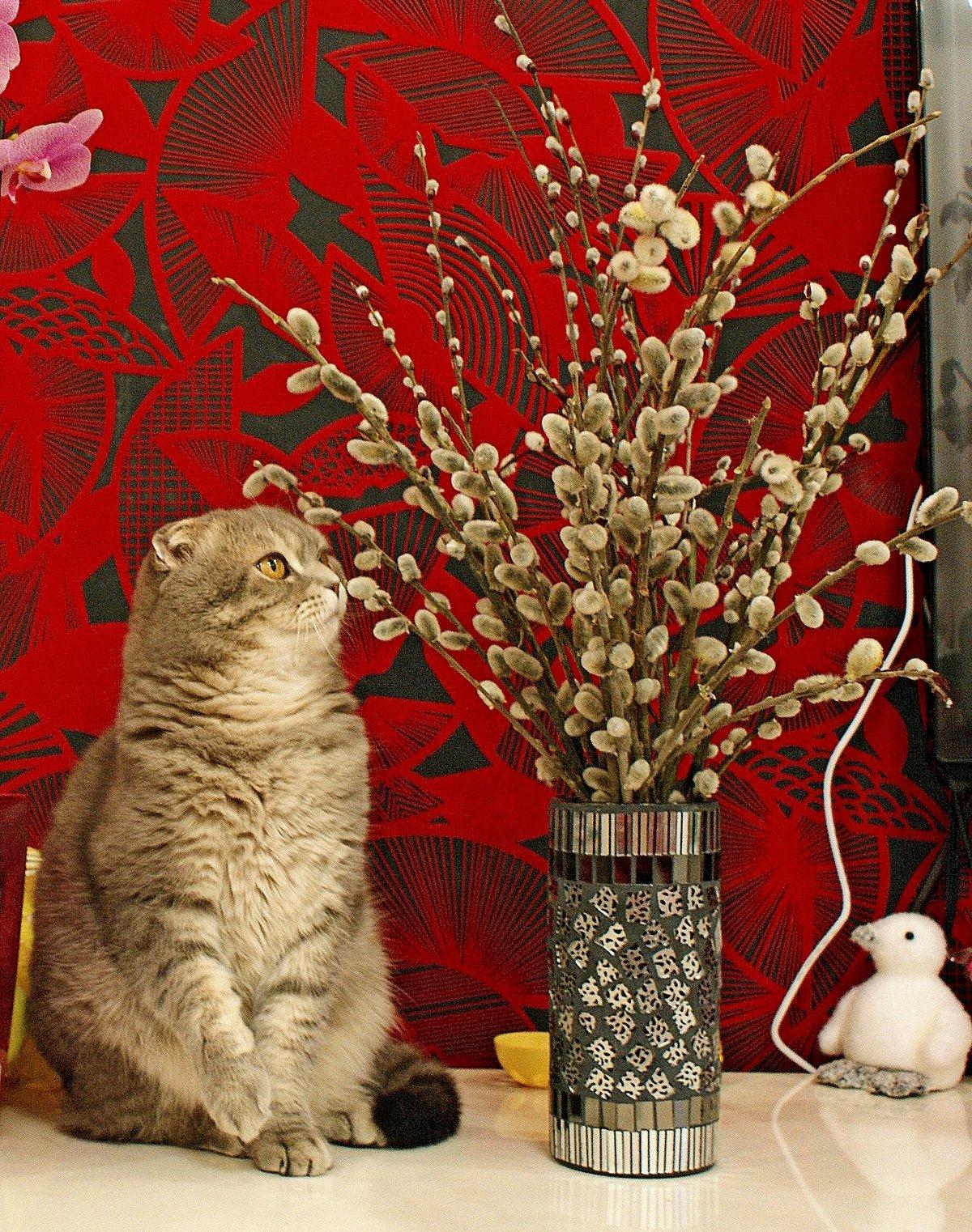 Картинки верба и котик