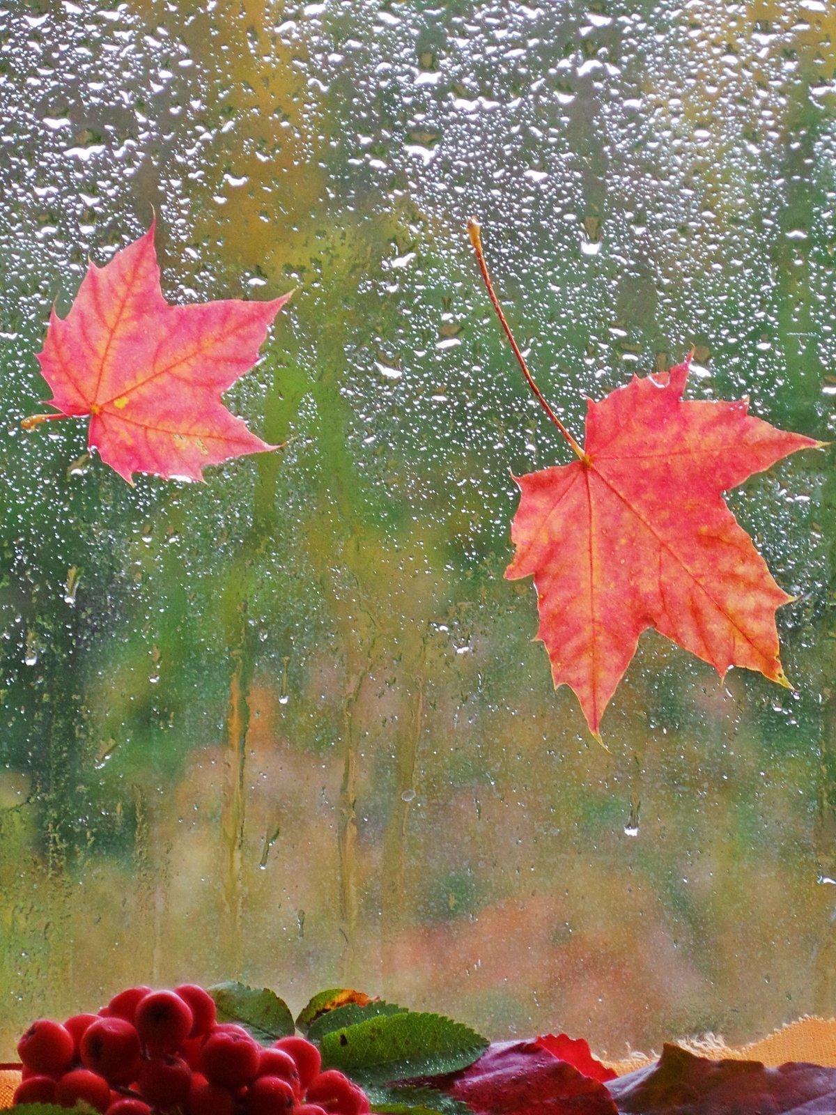открытки дождливое утро осень сегодня они